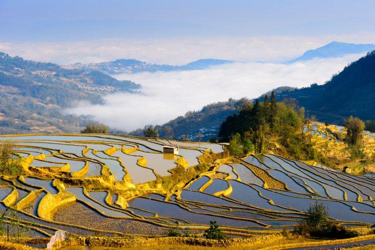 Rizière en terrasse à Yuanyang